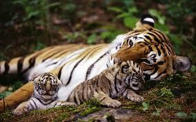 Mamme-tigri e figli stressati