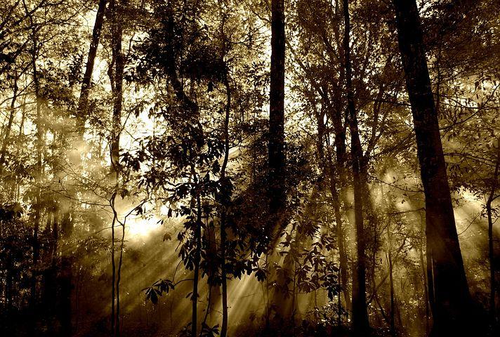 Alberi e foreste. Un'orchestra che suona e racconta
